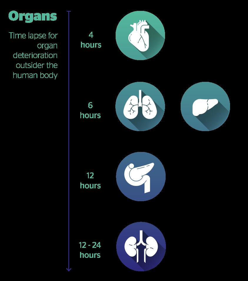 transplantHub Organs